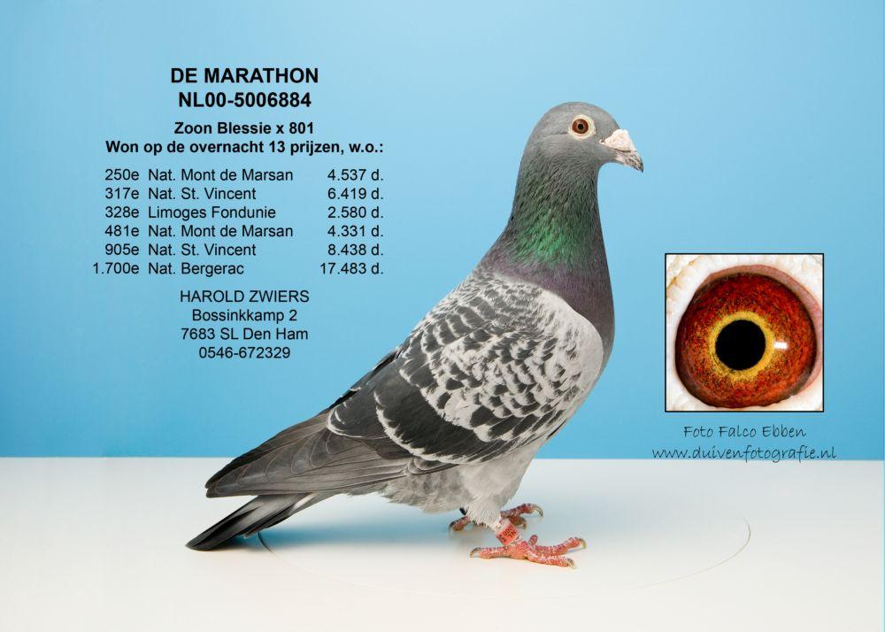 NL00-5006884 马拉松