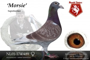 NL01-1740489 Morsie