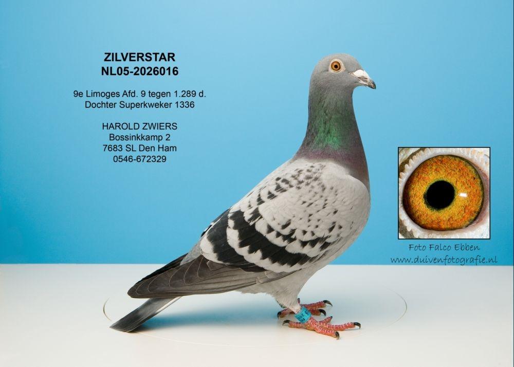 NL05-2026016 Zilverstar