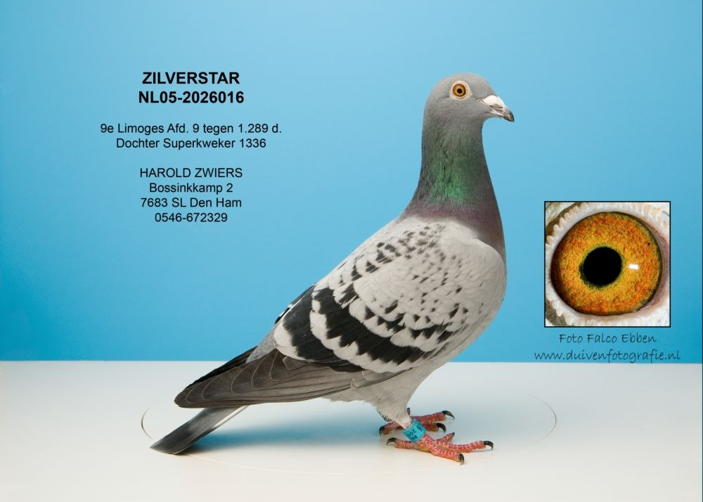 Nl05-2026016 Silver star
