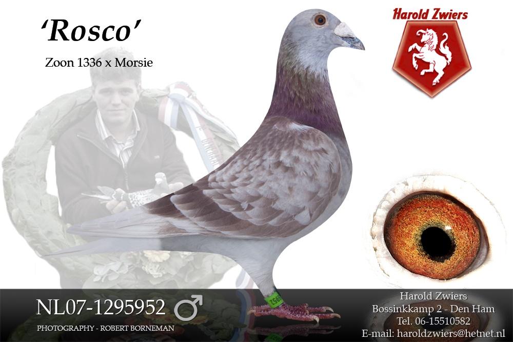 NL07-1295952 Rosco
