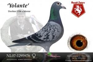 NL07-1295976 Yolante