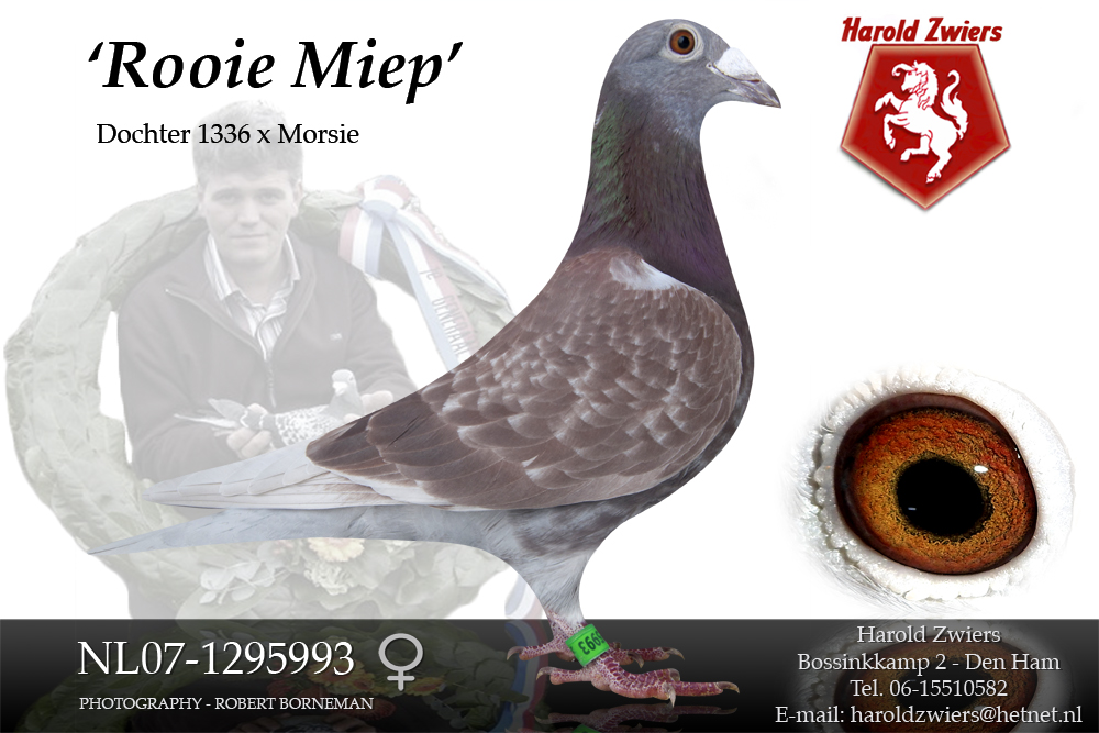 NL07-1295993 Red Miep