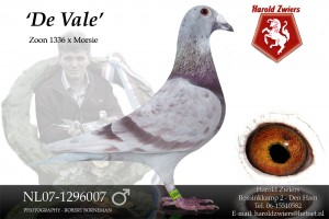 NL07-1296007 De Vale