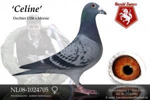 NL08-1024705 Celine