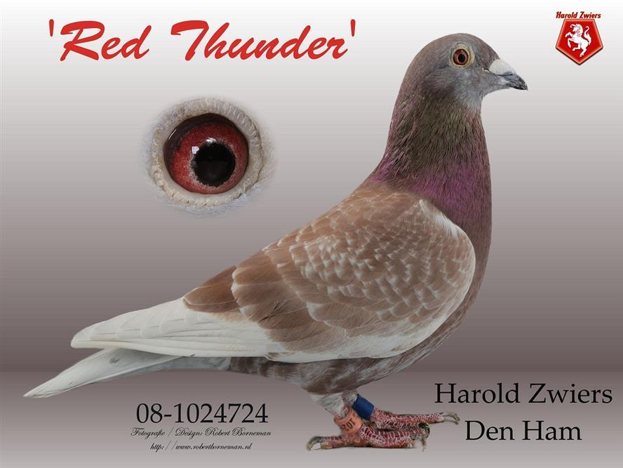 NL08-1024724 Red Thunder