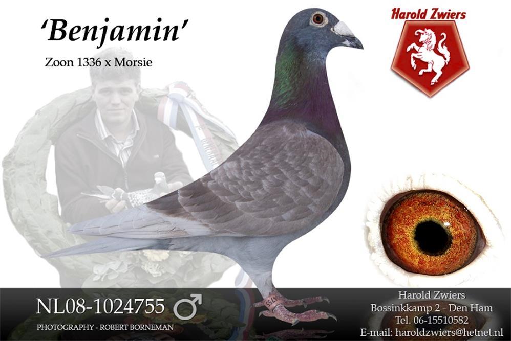 Benjamin Nl08-1024755